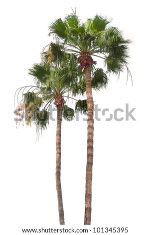 two palms - stock photo