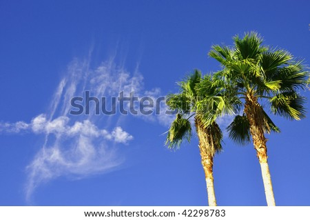 two palms against pretty blue sky with interesting cloud formation useful as a background - stock photo