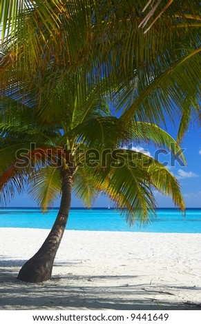 Two palms are on a tropical beach, the island Kuredu in the Indian Ocean, Maldives - stock photo