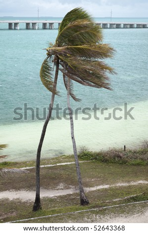 Two palms bending in the wind at Bahia Honda state park - stock photo