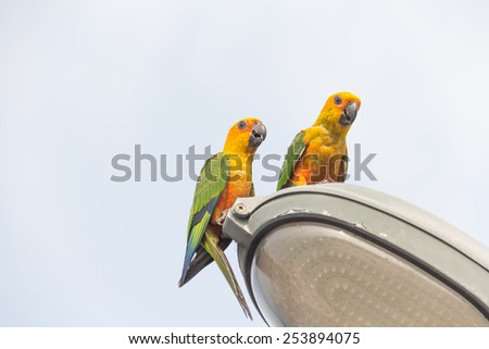 Two parrot on Light Street. - stock photo