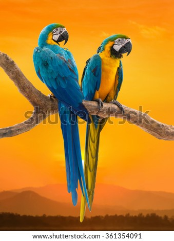 two parrots with sunset background