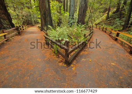 Two paths lead to different directions - stock photo