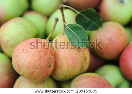 Two pears with leaves on a background of other pears - stock photo