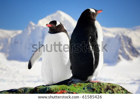 Two penguins dreaming - stock photo