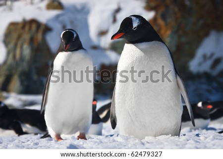 Two penguins dreaming, mountains in the background - stock photo