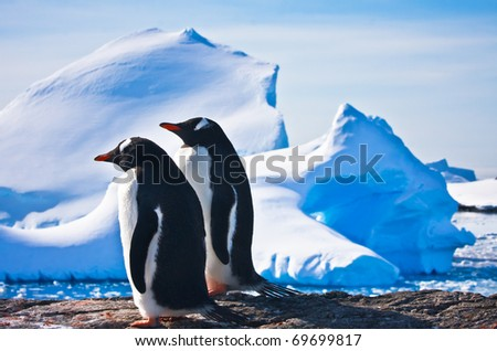 Two penguins dreaming sitting on a rock, glaciers in the background - stock photo