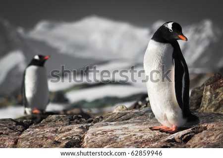 Two penguins dreaming sitting on a rock, mountains in the background - stock photo