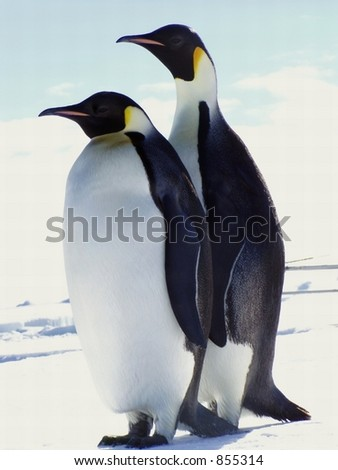 Two penguins in Antarctica - stock photo