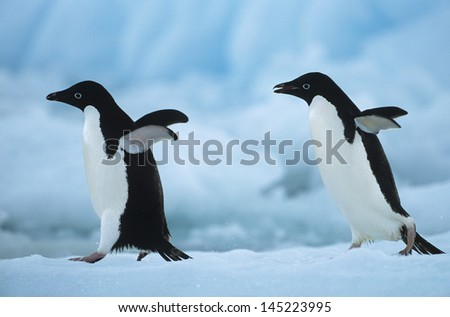 Two Penguins on snow - stock photo