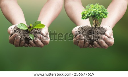 Two people hands holding young plant and big tree over blurred soil background. Ecology concept. - stock photo
