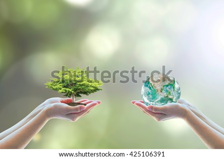 Two people human hands holding/ saving growing big tree on soil eco bio globe in clean CSR ESG natural sunlight background World environment day go green concept Element of the image furnished by NASA - stock photo