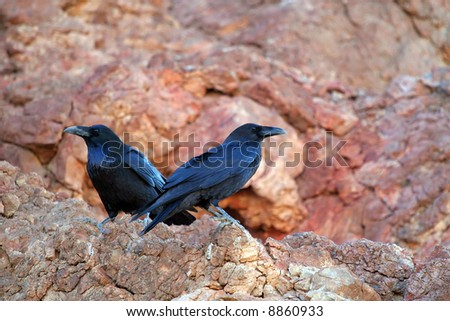 Two Perched Ravens - stock photo
