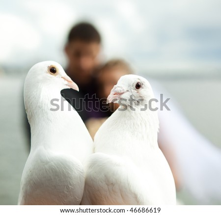 two pigeons and newlyweds as the background - stock photo