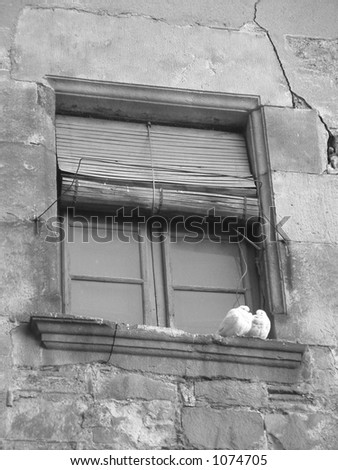 two pigeons cuddling on window sill - stock photo