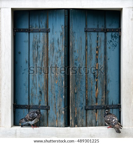Two pigeons sitting on an old rustic blue window in Venice, Italy