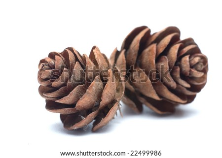 Two pine cones on white - stock photo