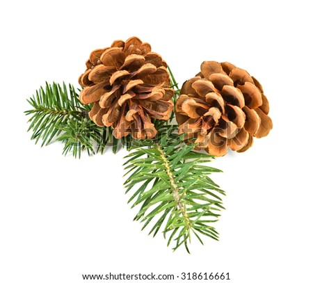 Two pine cones with branch on a white background - stock photo