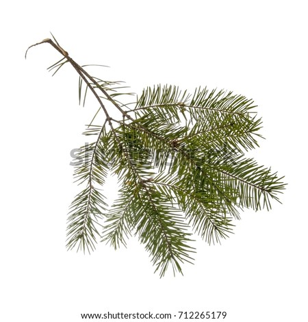 Two pine, fir twigs isolated on white. From Christmas tree.