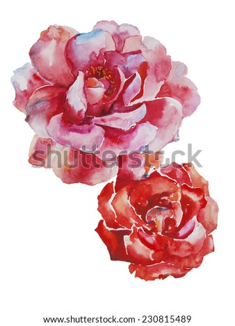 Two pink and red roses flowers original watercolor art isolated on white background - stock photo