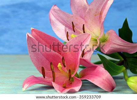 Two pink large Lilies, selective focus. - stock photo