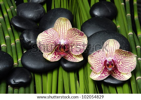 Two pink orchid and stones with green plant and bamboo grove background - stock photo