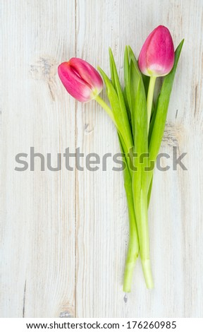 two pink tulips on white wooden surface - stock photo