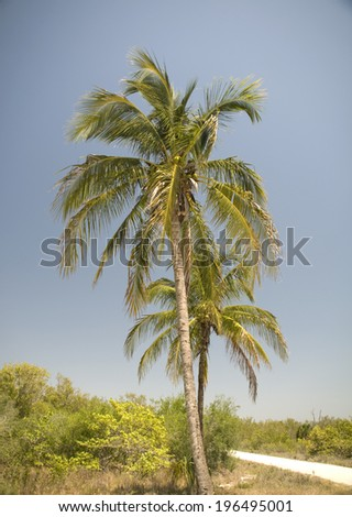 Two plam trees against a clear blue sky. - stock photo