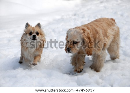 Two playful dogs in the snow - stock photo