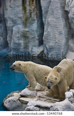 Two playful white bears - stock photo