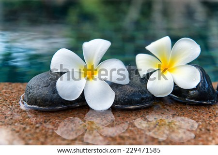 Two Plumeria Flowers on Row of Stones at Edge of Pool in Peaceful Spa Setting - stock photo