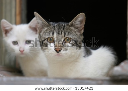 Two poor cats in the window - stock photo