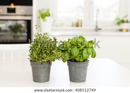 two pots with herbs with unfocused kitchen interior in the background - stock photo
