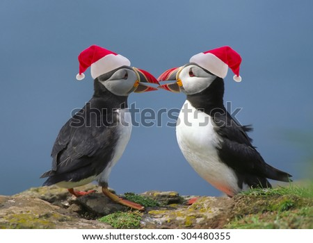 Two puffins with Santa's red hats - stock photo