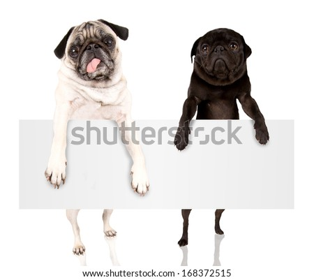two pugs holding a blank sign that can be filled with text - stock photo