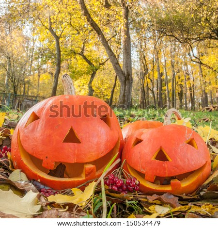 two pumpkin on grass with leaves