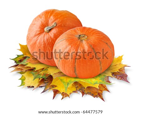 Two pumpkins on autumn leaves isolated on white - stock photo