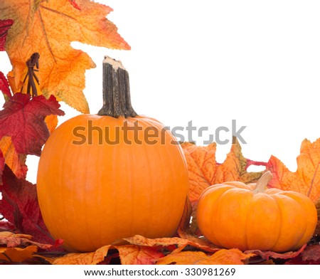 Two pumpkins with a leaf border on a white background