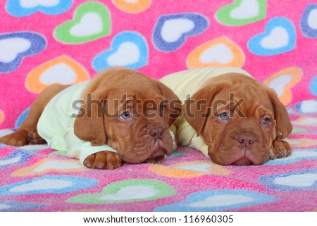 Two puppies in children's clothes - stock photo