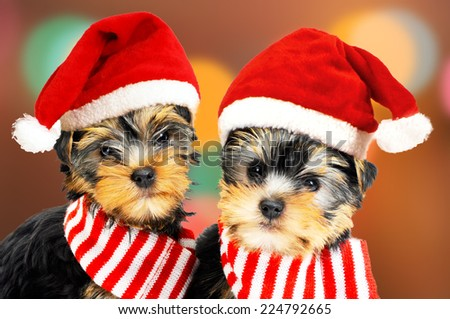 Two puppies in red Santa hats - stock photo
