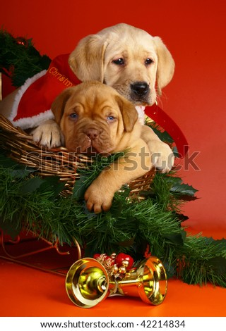 Two puppies in sledge with a Christmas garland.