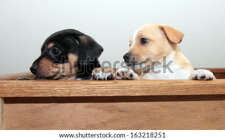 Two puppies looking to the left - stock photo