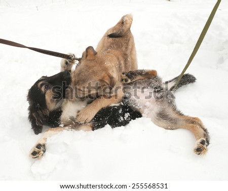 Two puppies playing on white snow - stock photo