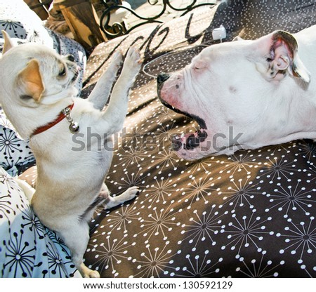 Two puppies playing together - stock photo