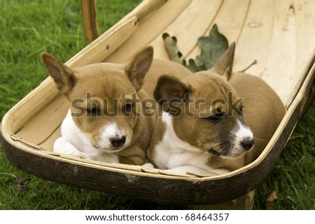 Two Puppies resting in a Sussex Trug