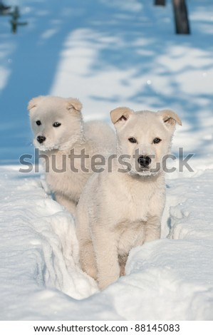 Two puppies. Two puppies in the deep snow in the woods.