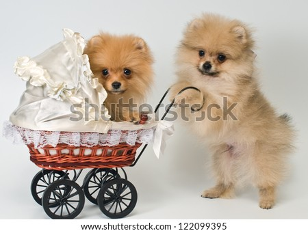 Two puppies with a sidecar in studio