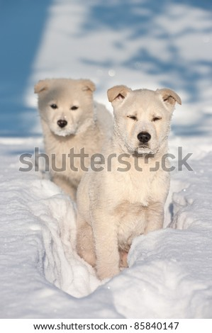 Two puppy dogs wandering. - stock photo
