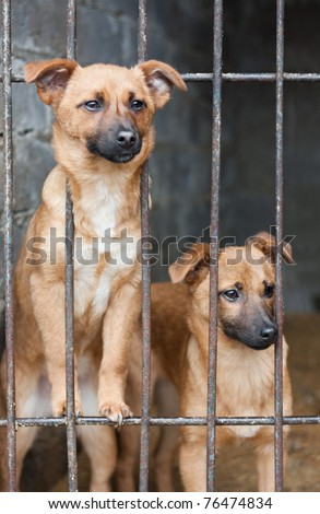 Two puppy locked in the cage - stock photo