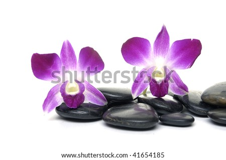 Two purple orchid and black stones
